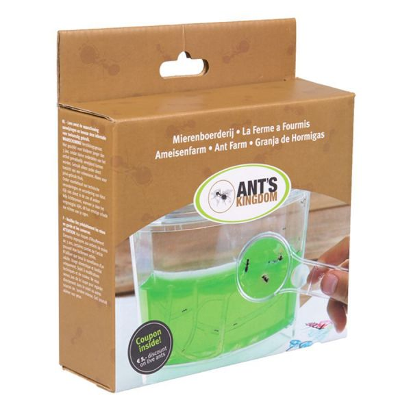 Ants for Ant's Kingdom Gel Ant Farm
