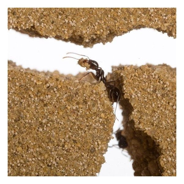 T-Farm ant inside