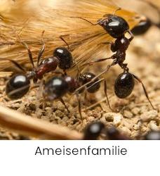 Ameisen familie