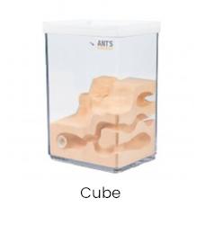 Ameisenfarm cube